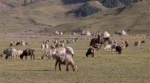 Woman Riding On Horse To Move Flock Of Sheep