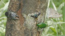 Stag Beetle Moving On Tree Trunk Among Other Insects