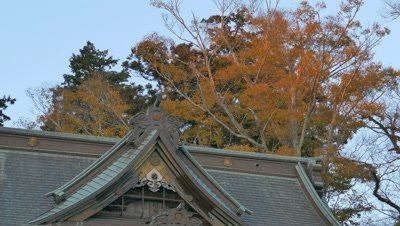 Autumn Leaves and Temple Top