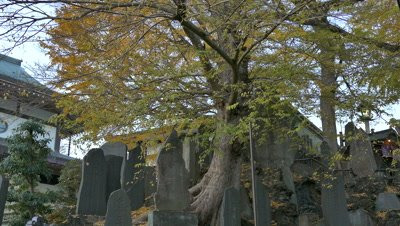 Autumn leaves and Stele, Narita, Chiba, Japan