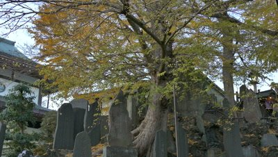 Autumn leaves and Stele, Narita, Chiba, Japan