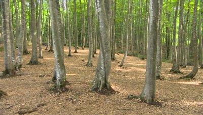 Beauty Forest (Bijin Bayashi Forest), Tokamachi, Niigata, Japan