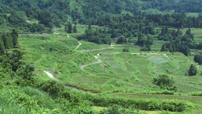 Rice Terraces, Hoshi-toge, Tokamachi, Niigata, Japan