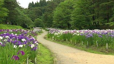 Ijimino Park, Shibata, Niigata, Japan