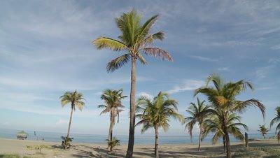 Palm Trees aganist Blue Sky and Sea