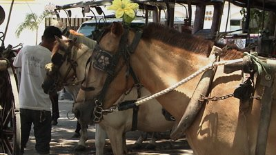 A Lin up of Horse-drawn Carriage