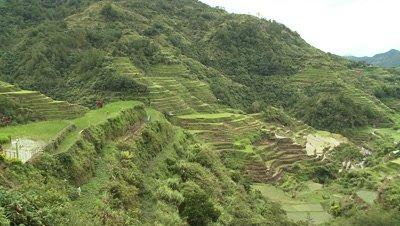Rice Terraces, Philipines