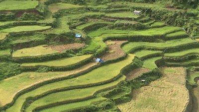 Banaue Rice Terraces, Philipines