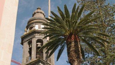 Palm tree swaying in the wind in Tenerife, Spain