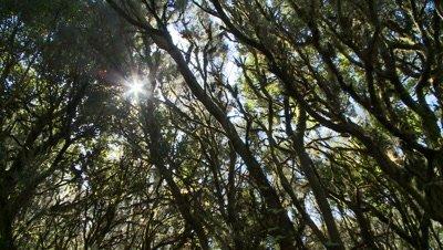 Sunshine filtering through foliage in Tenerife, Spain