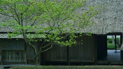 Tree with green leaves and thatched house