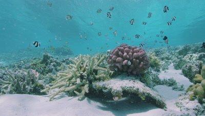 Coral Reef and tropical fish in Zamami Island, Okinawa Prefecture, Japan