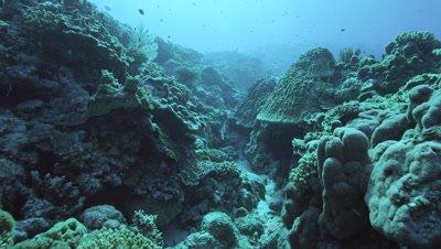 Coral Reef in Kuba Island, Okinawa Prefecture, Japan