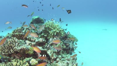 Tropical fish in Amuro Island, Okinawa Prefecture, Japan