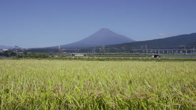 Shinkansen passing in front of Mt. Fuji