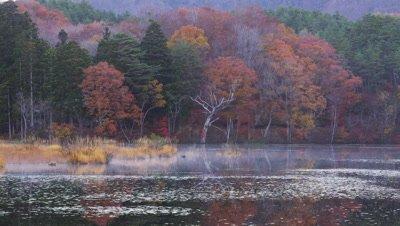 Kannon-Numa Pond in autumn
