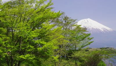 Mt. Fuji and tree with green leaves