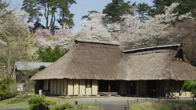 Thatched roof house and cherry tree