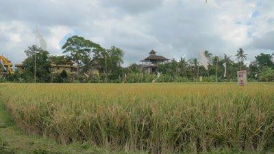 Paddy Ubud, Bali, Indonesia