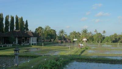Pastoral Life in Ubud, Bali, Indonesia