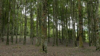 Natural Park Forest, Bedugul, Bali, Indonesia