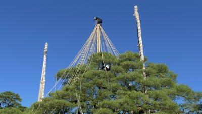Snow Hanging Work at Kenrokuen Garden, Kanazawa, Japan