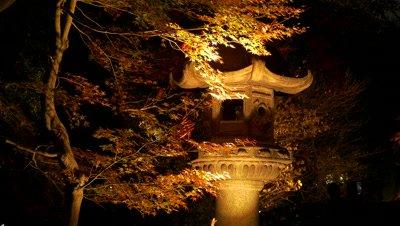 Night View of Rikugien Garden in Autumn, Tokyo, Japan, Time-lapse