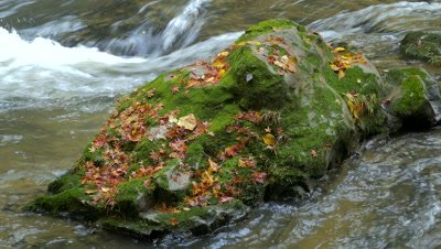 Autumn Leaves on the Rock, Chiba, Japan