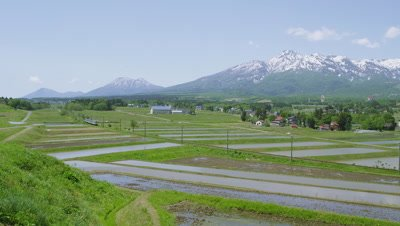 Local train passing through rice field, Joetsu City, Niigata Prefecture, Japan