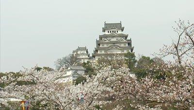 Himeji Castle and Cherry Blossoms, Himeji, Japan