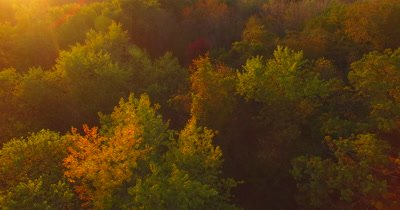 Aerial of a forest in autumn