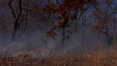 Tallgrass prairie fire burns near a woodland
