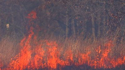 Fire burning on the tallgrass prairie