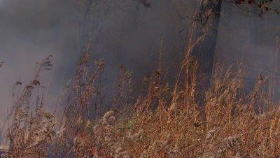Smokey fire burning on the tallgrass prairie