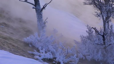 Water flowing past snow covered trees in Yellowstone National Park