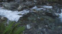 Fresh Water Stream Flowing Over Rough Rocky Terrain. Cine Slider Shot Passes Ferns.