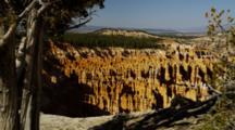 Red And Tan Rock Spires Framed With Juniper Tree. Utah.