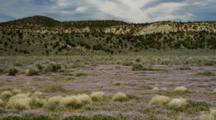 Field Of Sage, Bunch Grass And Wildflowers Near Rim Of Grand Canyon, Shot Pans Left To Right, Arizona.