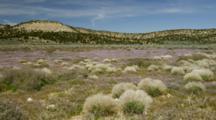 Field Of Sage, Bunch Grass And Wildflowers Near Rim Of Grand Canyon, Arizona.