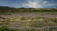 Field Of Sage, Bunch Grass And Wildflowers Near Rim Of Grand Canyon, Arizona.