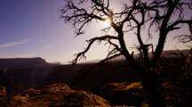 Grand Canyon Rim With Silhouetted Tree And Sun In Starburst Pattern, Arizona.