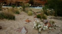 Wildflowers And River At Lees Ferry, Fast Current, Many Colored Rocks, Butte.