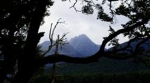 Silhouetted Tree Outlines Mountain Backdrop. Insects Fly Through. South Island, New Zealand.