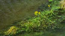 Detail Of Yellow Flowers And Plants Waving In The Wind Along A Stream Bank.
