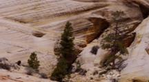 Striated Lines In Sandstone Rock Formations, With Conifers And Shale In The Foreground. Zion National Park, Utah.