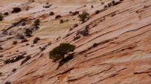 Striated Lines In Rounded Sandstone Rock Formations, With Conifers And Shale Piles. Zion National Park, Utah.