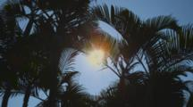 Palm Trees Sway In The Tropical Breeze, The Sun Moves Through The Palm Fronds, Kailua-Kona, Kealakekua Bay, Hawaii.