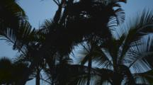 Cine Slider View As Palm Trees Sway In The Tropical Breeze, The Sun Moves Through The Palm Fronds, Kailua-Kona, Kealakekua Bay, Hawaii.