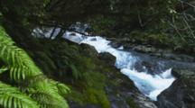 Rushing Stream Cascades Over The Rocks And Is Framed By Moss And Ferns. Milford Sound, New Zealand.