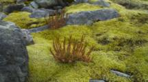 Shot Zooms Out. Rocks, Moss And Low Vegetation Growing In The Valley Beneath Mount Cook.